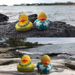 EFVE3362 (jebigler) Tags: ducks hawaii2017
