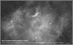 "Top of the North America Nebula in Cygnus (Lee ""Pulitzer"" Pullen) Tags: skywatcherevostar80eddspro asi1600 zwoasi1600mmc eq5 northamericanebula nebula astronomy astrophotography cityastronomy cityastrophotography amateurastrophotography hydrogenalpha narrowband ngc7000"