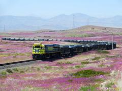FERRONOR LOC. 4604 (EL MEJOR FLICK´R DE TODOS!) Tags: tren ferronor desierto florido