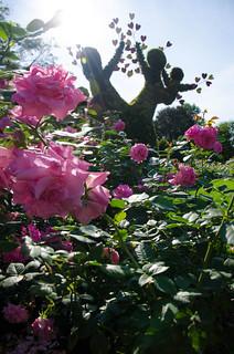 Hochelaga Maisonneuve : Love is in the air 2