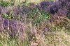 2017-08-28 cannock chase 050 (sonya.britton) Tags: cannockchase staffordshire ancientforest wood forest walk family tree lavender