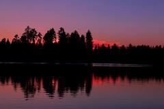 Sunset Behind Trees, Reflected (Spebak) Tags: spebak canon canondslr canon70d sunset reflection reflections trees lake manzanitalake lassenvolcanicnationalpark lassen clouds color skyonfire evening summer 2017 california