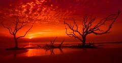 Jekyll Island in Red (Jon Ariel) Tags: jekyllisland jekyll driftwood driftwoodbeach trees tree sunrise beach goldenisles golden georgia ga ocean sea reflection