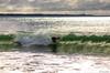AY6A0481 (fcruse) Tags: cruse crusefoto 2017 surferslodgeopen surfsm surfing actionsport canon5dmarkiv surf wavesurfing höst toröstenstrand torö vågsurfing stockholm sweden se