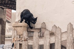 Jump or not... (Christian Cardenal) Tags: canon eos rebelt1i 500d cat gato black street jumping