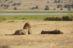 Ngorongoro, Tanzania, July 2017