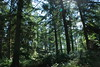 2017-08-28 cannock chase 007 (sonya.britton) Tags: cannockchase staffordshire ancientforest wood forest walk family tree