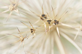 Zaaden / Seeds......