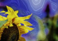 One Summer's Day (Shastajak) Tags: sunflower buddleia photoshopcc blending filters layers sliderssunday hss