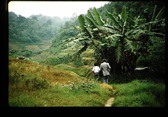 Studies On The Ruminat Physiology In Malaysia = マレイシアにおける反すう家畜の栄養生理 (JIRCAS) Tags: マレイシアにおける反すう家畜の栄養生理 マレーシア 野菜生産 植生 生活(風俗・習慣) 情報 cameronhighland null malaysia