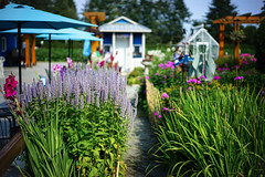 Weekend Farming Life in Langley, BC Canada. (TOTORORO.RORO) Tags: sony a7ii ilce7m2 carl zeiss sel55f18z sonnar bc canada greatervancouver britishcolumbia colors vancouver canadian lifestyle farm weekend activities entertainment tranquility nature relax mindfulness flower