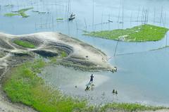 Land of beauty! (ashik mahmud 1847) Tags: bangladesh d5100 nikkor river water people boat man green
