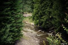 DSC_3593 (Olga Kapushtenska) Tags: wood tree bridge putila chernivtsi nature mountains water pine christmas river bukovina путила буковина карпаты горы лес сосны река природа olga k