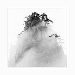 Veil of mist (Frans van Hoogstraten) Tags: huangshanmountain huangshanpine anhui china mountain mist misty minimalism magic clouds calmness contrast cloudy fineart infinity tao landscapephotography landscape monochrome nature pinetree rocks silence stillness still tree tranquility view valley winter white