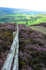 Welsh Hill Top Heather (stumpyheaton) Tags: moelygaer llantysilio walk wales hills heather quarry uk outside photoshop august sky d5100 day green hill fort footpath llangollen nikon north clouds view mountain