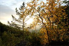 Скоро осень (Kirill & K) Tags: avalyak summer august nature landscape south southern ural bashkiria аваляк горы природа пейзаж лес южный урал башкирия лето август birch leaves pine sunlight sun evening вечер солнце свет листья берёзка сосна осень autumn