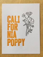 California poppy letterpress print (artnoose) Tags: type black orange etsy reward patreon club month print letterpress illustration drawing botany botanical flower state official poppy california