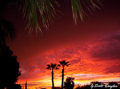 Fire in the Sky (Scott Douglas Worldwide) Tags: az arizona awesome america amature american freedom f flickrunitedaward firesky perfect p peaceful paradise palmtree