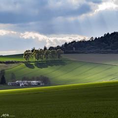 Aprilsonne im Weserbergland (mmsig) Tags: 2017 ausflug raps rapsfeld sunset germany rape sky landscape field canola explore landschaft horizont horizon sun sonne sonnenuntergang backlight gegenlicht mmsig