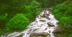 Stream on the way to Lakkam waterfalls (Dhina A) Tags: sony a7rii ilce7rm2 a7r2 variotessar t fe 1635mm f4 za oss sonyfe1635mmf4 sel1635z river stream falls lakkam munnar kerala green