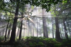 The awakening of the forest (Hector Prada) Tags: bosque luz amanecer primavera momento magia sol niebla bruma hojas árbol forest light sunrise spring sun sunbeams moment magic naturaleza nature paísvasco basquecountry