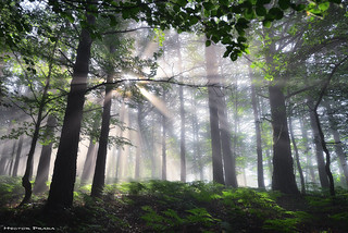 The awakening of the forest