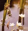 1984 Germany // Unser Garten - Our garden // Libelle (maerzbecher-Deutschland zu Fuss) Tags: 1984 germany maerzbecher deutschland garden unsergarten garten libelle