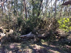 091317_Timucuan_KingsleyPlantation_5 (Eastern Incident Management Team) Tags: hurricane hurricaneirma timucuan florida nationalparkservice nationalpark