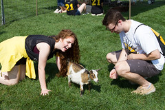 2017 New Student Move In Day-13.jpg (Gustavus Adolphus College) Tags: football gamegame homecoming game pc kylee brimsek petting zoo 20170923 animals outdoor outside students homecomingfootballgame pckyleebrimsek pettingzoo