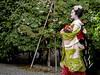 A Stroll in the Garden (Rekishi no Tabi) Tags: apprenticegeiko maiko apprenticegeisha kyoto geisha leica leicacam