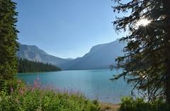 Emerald Lake (Everyday Glory!!!) Tags: emeraldlake lake emerald canada nationalpark favorite canadianrockies britishcolumbia emeraldcolor yohonationalpark emeraldlakelodge mountainlake turqoise loop trail hiking