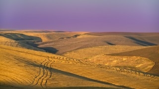 Wheat Harvest Golden Hour 3462 C