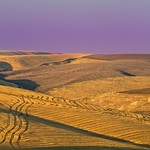 Wheat Harvest Golden Hour 3462 C thumbnail