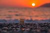 Danbo at sunset (Vagelis Pikoulas) Tags: danbo sun sunset porto germeno greece 2017 sea waves bokeh canon 6d tamron 70200mm vc beach landscape seascape autumn september