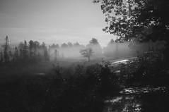 Day 249/365 (Lee Chu) Tags: project365 sonynex6 batis25 torrance ontario canada fog torrancebarrens night
