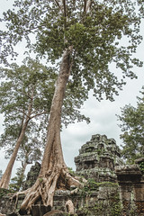 Trees at the Ta Prohm (livingsta) Tags: trees temple taprohm seasia fig stranglerfig thitpok hugetrees strangler cambodia siemreap angkor angkortemple ancienttrees ancient tree landscape landscapes forest templeforest mysterious spooky