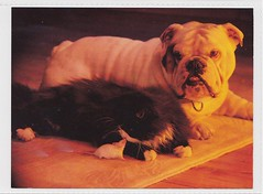 Furry Friends Commercial Collection 2 (mrsris) Tags: postcard athena dogs bulldog mouse cat