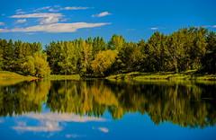 Reflections (stevenbulman44) Tags: reflection tree water blue green calgary canon polarizer 70200f28l