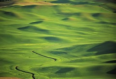 Palouse au printemps <>Palouse in spring. (France-♥) Tags: 1054 palouse washingtonstate green vert champs fields usa vallons hills landscape