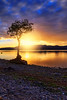The Lone Tree at Sunset (Portrait) (MilesGrayPhotography (AnimalsBeforeHumans)) Tags: autumn britain bay milarrochybay canon canon6d dusk eos ef europe evening f4l glow haze iconic landscape lens longexposure le loch lochlomond milarrochytree milarrochy nd canoneos6d 1635 ef1635mmf4lisusm canon1635mmf4lisusm nd1000 nightscape nd30 10stopper outdoors photography calm tranquil reflections rocks rays scotland sky scenic sunset sunshine sunlight sunburst lochlomondandthetrossachs twilight tree lonetree uk unitedkingdom waterscape wide westhighlandway