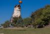 37/52 Target locked.  Splash one bogey. (Jasper's Human) Tags: 52weeksfordogs 52wfd aussie australianshepherd dog fly chuckit run leap jump hover