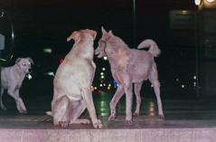 Leica af-c1 2013 16