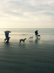 WW12a (Cathie J Brown) Tags: whippets west wittering