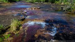 La Macarena - Caño Cristales (Jacques_VDS) Tags: cañocristales lamacarena colombie fleuverivière meta co