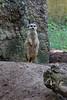 Rhenen - Ouwehands Zoo 2017-8454 (Quistnix!) Tags: 2017 ouwehandszoo dierenpark zoo