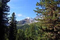 Paesaggio alpino (giorgiorodano46) Tags: agosto2017 august 2017 giorgiorodano solda sulden italy sudtirolo altoadige granzebrù bosco woods alps alpen alpi alpes alpinelandscape landscape mountain