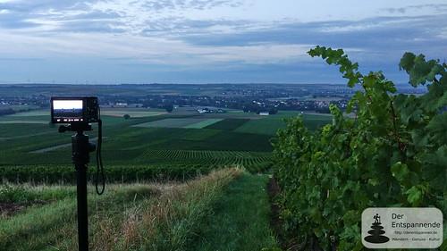 Selzstellung - Blick auf Selzen, Hahnheim