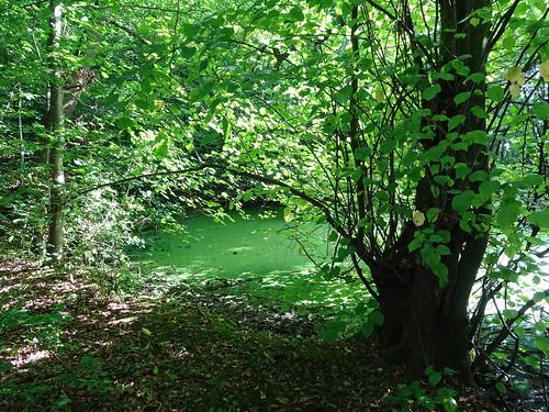 Green pond, 2017 Aug 13 -- photo 1