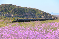 Tamarico (Mono_Shadow) Tags: trenes trains tren train ferronor ferrocarril ferrocarriles desierto florido tamarico vallenar cap compañia acero pacifico emd gt46ac 4605 4600 gp49 2808 601 gt26 atacama locomotive