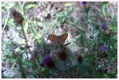 A Butterfly (GigiBona) Tags: butterly nature insects pentaxmesuper pentaxsmc50mmf20 kodakcolorplus200 expiredfilm analog analogphotography analogico film colornegativefilm c41 farfalla insetti insectphotography